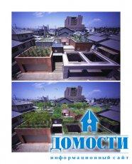Зеленая крыша над головой