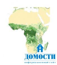 Многообразие функций африканских лесов