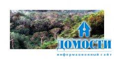 Прибрежный лес восточной Африки