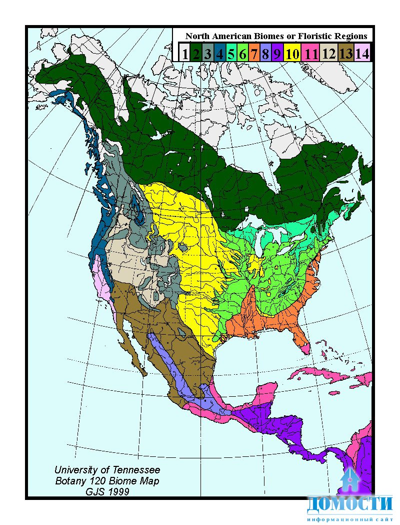Про северную америку сельва Коллекция картинок Флора южной америки реферат