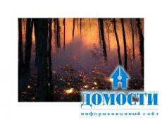 Основные причины пожаров: природа, человек, климат