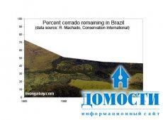 За сохранение бразильского леса взялись в США