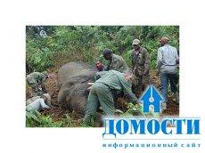 Защита редких экосистем в бассейне Конго