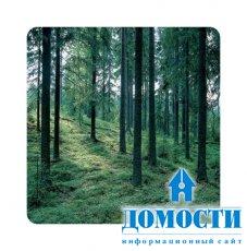 Цели и задачи управления лесами