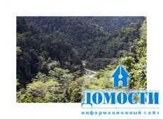 Первые норвежские миллионы уже отправлены на восстановление лесов в Индонезии