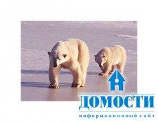 Последствия климатических изменений в России