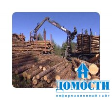 Лесная промышленность скупает поваленные деревья