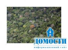 Для сохранения перуанского леса требуется международная помощь