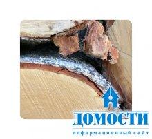 Вопрос о пошлине на российскую древесину решен