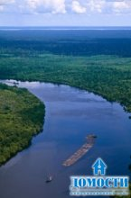 Год борьбы за сохранение леса