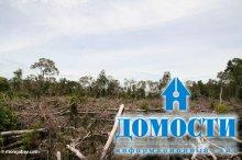 Индонезия запуталась в лесных законопроектах