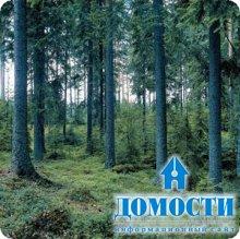 Новый стандарт лесной сертификации в Финляндии
