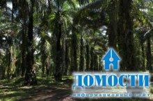 Как пальмовое масло влияет на экологию?