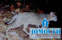 Уникальная кошачья экосистема