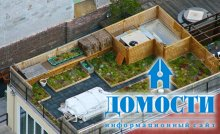 Сады на крыше: ключ к экологичным городам?