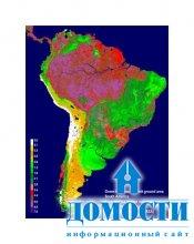 В Амазонке гибнут деревья
