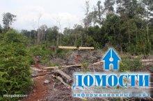Правила продажи тропической древесины в ЕС