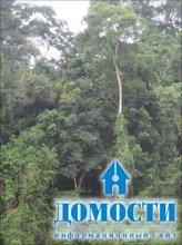 Возрождение лесной отрасли Либерии
