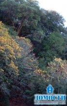 Калифорнийский вечнозеленый лес