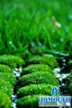 Зеленый ковер изо мха