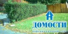 Деревянная красота и защита для дома