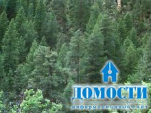 Смешанный лес Северной Америки