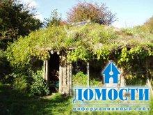 Дома в гармонии с природой