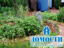 Дизайн цветочно-овощных клумб