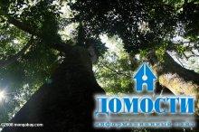 Тропический лес на экваторе