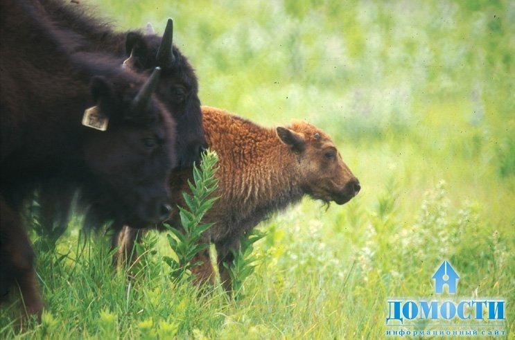 Животные прерии северной америки картинки