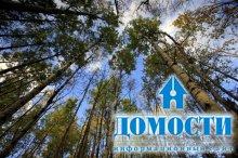 Реликтовый лес – в унитаз