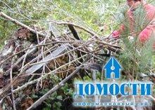 Лесной дом от непогоды