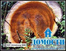Структура волокон дерева