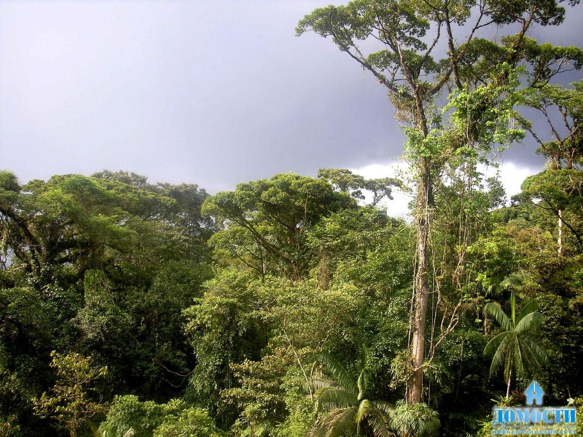 ... экваториальные леса Южной Америки: dom-sweet-dom.ru/3578-priroda-ekvatorialnogo-lesa.html