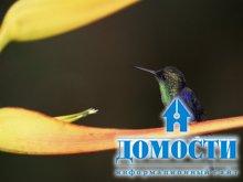 Уникальность и важность экваториального леса