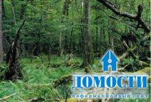 Европейские смешанные леса: климат