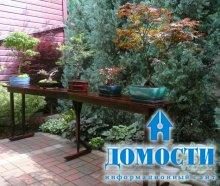 Американский сад с японскими деревьями
