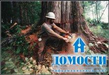К чему приводит уничтожение природных лесов