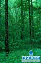Американские переменно-влажные леса