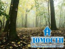 Экология смешанного леса и влияние человека