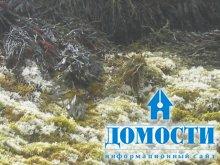 Осветление мхов – индикатор экологических проблем