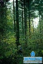 Растения тайги Северной Америки