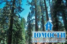 Экосистема северных хвойных лесов