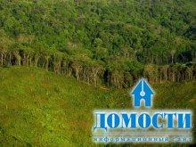 Современная чума – уничтожение леса