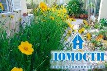 Засухоустойчивый двор: 5 растений