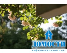 Надежная поддержка садовых роз