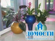 Комнатные растения для интерьера