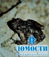 Животные уникальных кавказских лесов