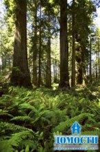 Физические характеристики хвойного леса
