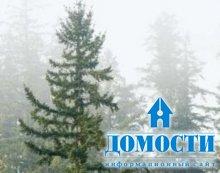 Климат и расположение хвойных лесов